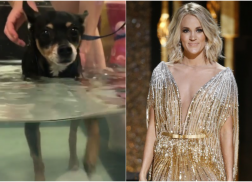Carrie Underwood's Beloved Dog in Recovery After Suffering Paralysis