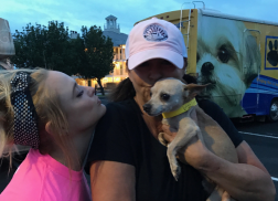Miranda Lambert's MuttNation Foundation Rescues 72 Dogs During First Day of Hurricane Harvey Recovery
