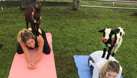 KB in the City: Nashville Goat Yoga