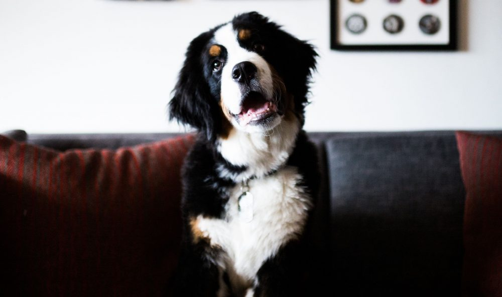 Check Out These 'Pawsome' Dog Spots in Music City This Spring