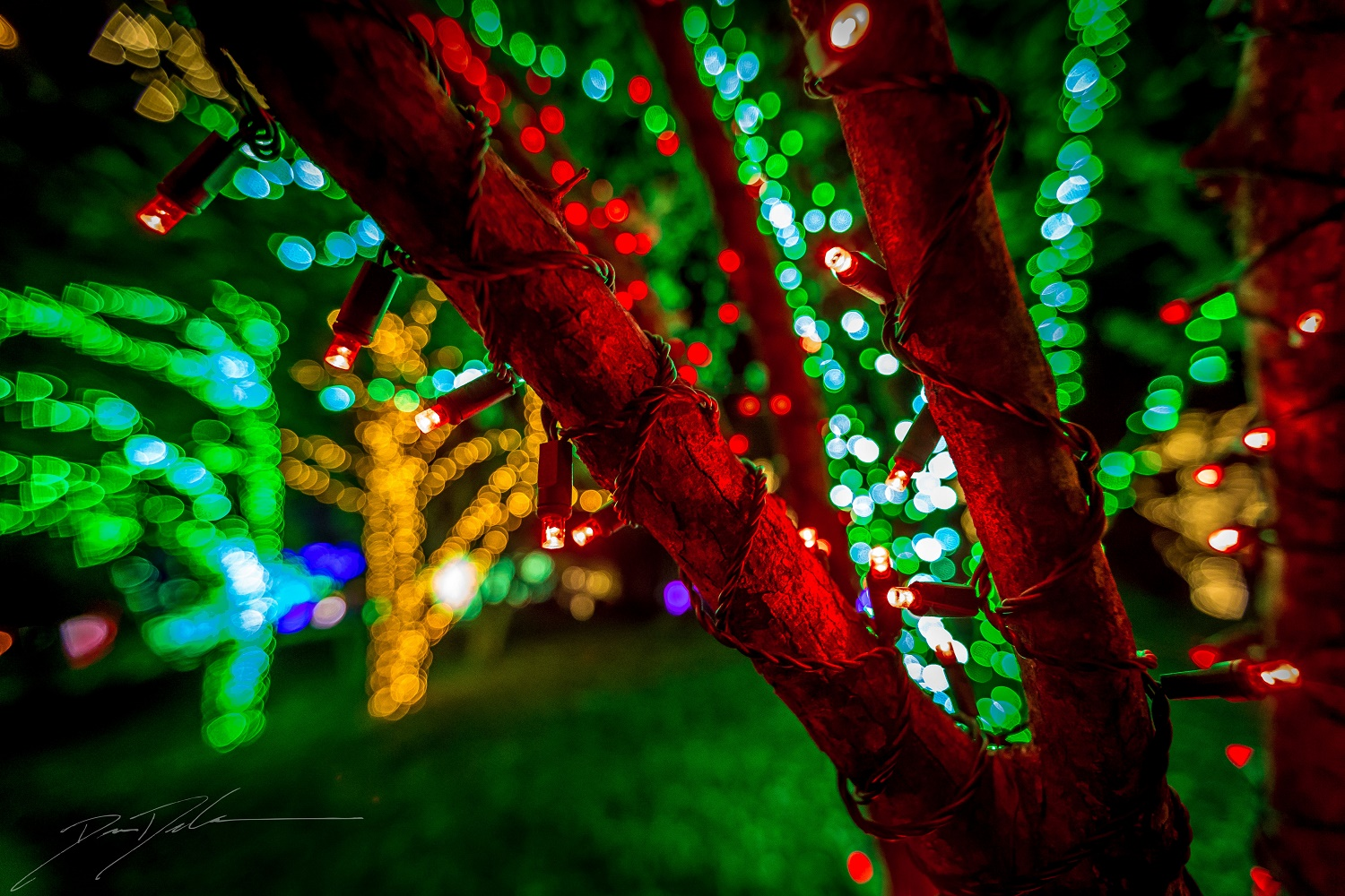 Cheekwood Holiday LIGHTS; Photo credit: Dion Degennaro