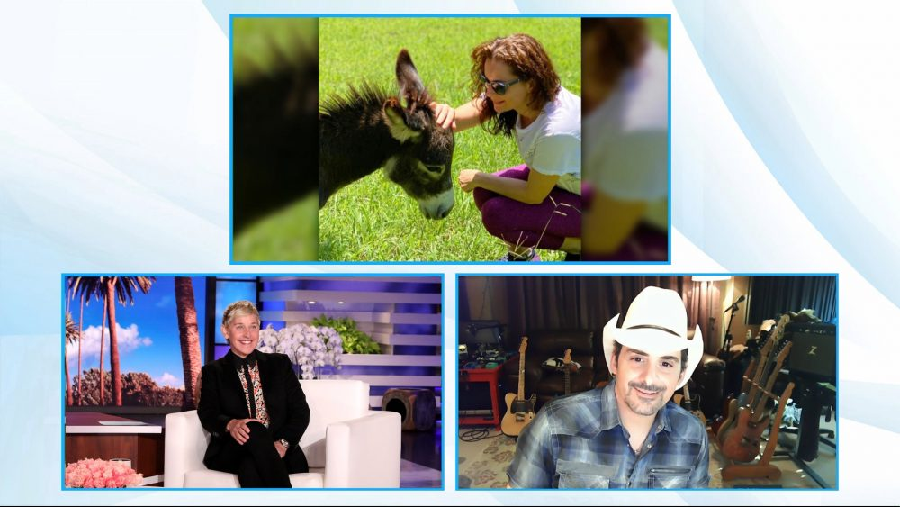 Brad Paisley Talks Donkey Rescue and Free Groceries on 'Ellen'