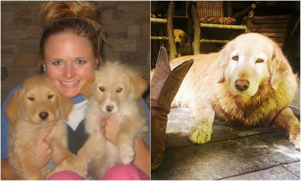 Miranda Lambert Shares The Loss Of Her Golden Retriever, Waylon